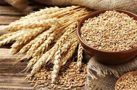 Govt increases wheat support price by over 14%